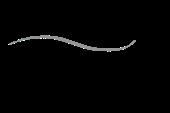 Erb logo black resized 170